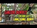 Cucak Ijo Malas Bunyi Jadi Gacor Saat Dipancing Pake Cucak Ijo Ini Auto Gacor Tiada Henti  Mp3 - Mp4 Download