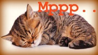 3 Часа - Умиротворяющее Мурлыканье Еще Раз:) / If You Love Cats :)
