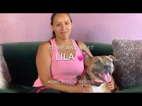 California American Staffordshire Terrier Rescue - ADOPTIONS