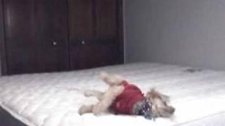 Wrigley Gymnastics Exercise