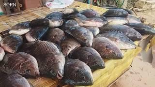 เที่ยวลาวหน้าหนาว EP.9 เลาะตัวเมือง นากาย, ร้านขายปลา น้ำเทีน แขวง คำม่วน ♡ ທ່ຽວນາກາຍ ຄຳມ່ວນ