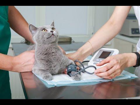 Ветеринарная клиника New Vet