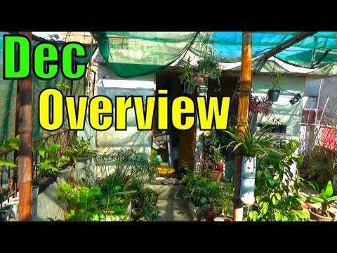 674# Vegetables Garden Overview | December Overview Good Vegetables to Grow (Urdu/hindi)