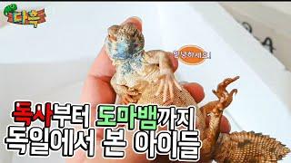 독사부터 도마뱀까지 독일에서본 한국인이 보여준 수많은파…