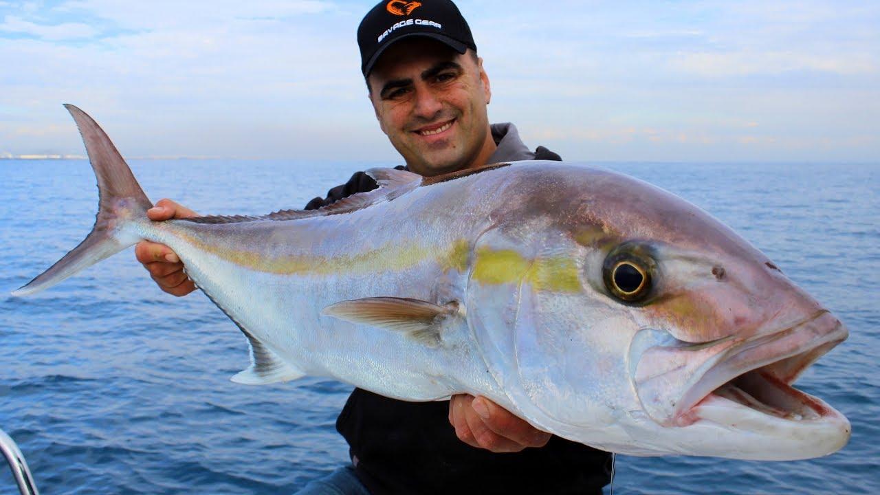Canlı Yemle Dev Kuzu Avı / Giant Amberjack Fishing ( ÇEKİLİŞ )