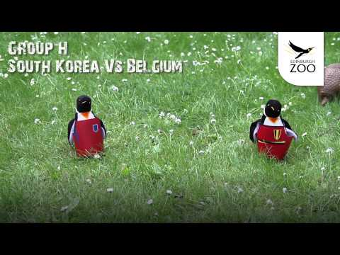 belgium-vs-south-korea---dillon-the-armadillo's-world-cup-predictions