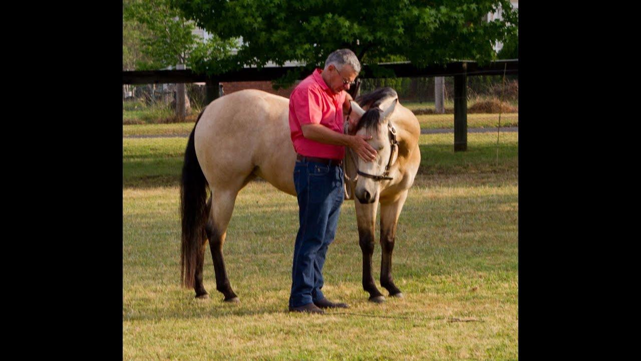Liberty Horse Training - Free Spirit Horse Training |Horse Training