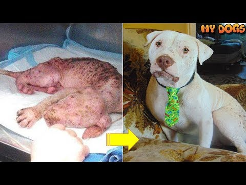 Rescue of a Dog Had Only Hours To Live With A Broken Heart
