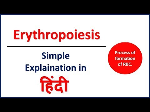 Erythropoiesis: Red Blood Cell Formation in HIndi   Bhushan Science