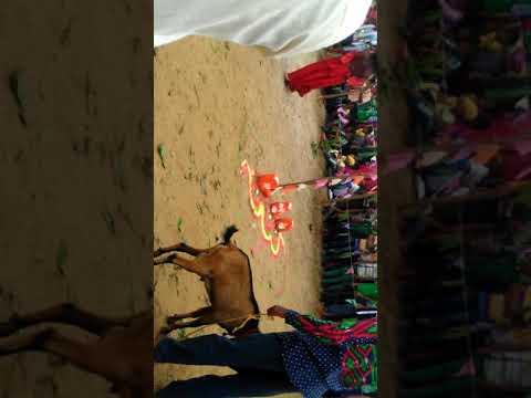 मेला में चखें राजस्थानी अचार व मुरब्बा..Bhartiya Shilp Mela, Handicraft mela-2018, Gumla Video from YouTube · Duration:  5 minutes 2 seconds