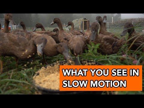 Watching Ducks in Slow Motion