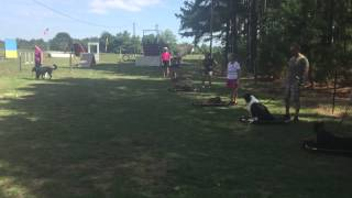 Charlotte Dog Training Aggression Obedience Boarding Off Leash