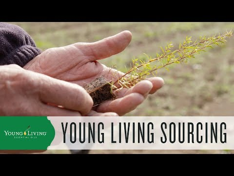 seed-to-seal:-the-young-living-sourcing-standards