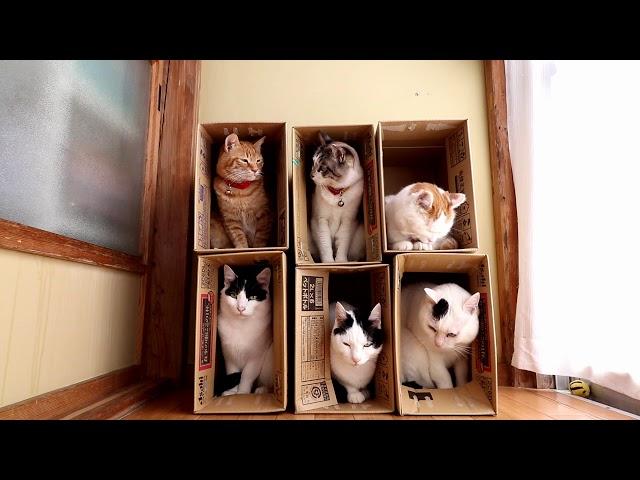 6つの箱と6匹の猫 Box and cat 2017#15 171107