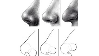 nose draw beginners