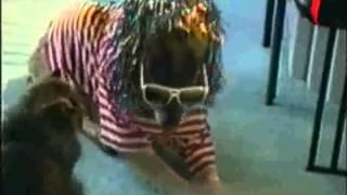 Улетные животные Выпуск 6