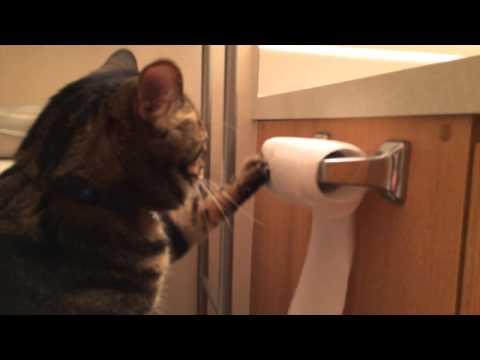Die Katze und das Klopapier