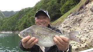 #287 へら鮒釣りの名手が魅せる至高の境地~神流湖 揺らめくウキに注ぐ情熱~ thumbnail