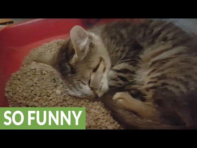Snoring kitten makes cutest noises ever