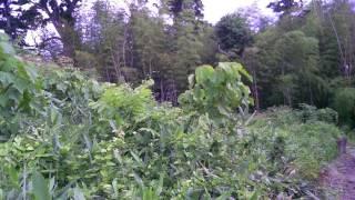 これから始まる大好きな草刈だ♪ と 自分に言い聞かせて藪の中を下見。 ...