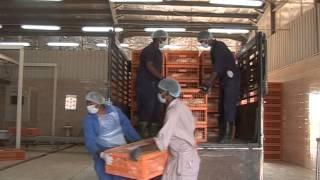 هيئة تطوير الزراعة - فيلم دواجن النيل السودانية