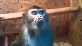 Прикол про обезьяну