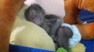 Baby Monkey | Doo Sleeps In Hammock - Funny Animals