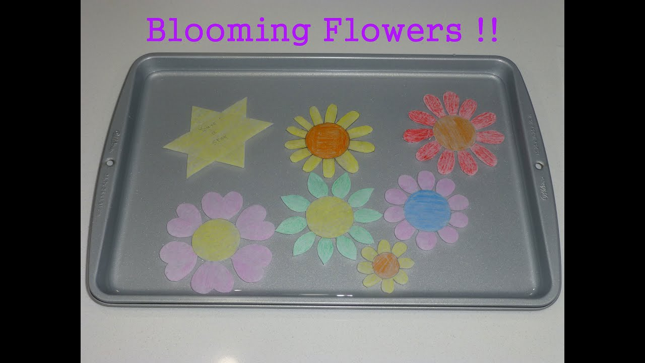 Blooming paper flowers trick kids crafts activity paper crafts blooming paper flowers trick kids crafts activity paper crafts for kids youtube mightylinksfo
