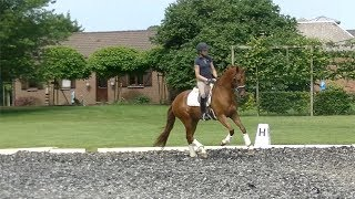 ***good moving dressage 5 y old mare by Wynton -Crackc for sale