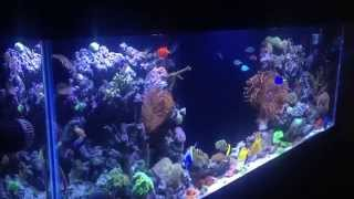Reef Tank Addiction Season 1 Episode 3 Ian's 150 Gallon Ree
