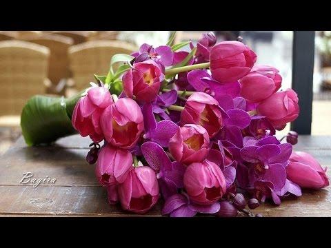 Купить комнатное растение Алое Вера в интернет-магазине с