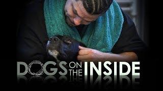 Documentary Showcase: Dogs On The Inside Tv Promo