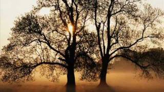 Golden Life - Ptak I Drzewo