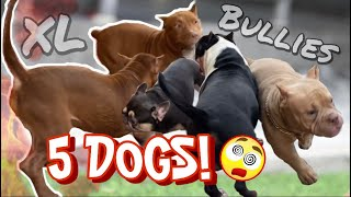 5 DOGS MEETING FOR THE FIRST TIME: XL PUPPIES, AMERICAN BULLIES & FRENCH BULLDOG | MR.BEAST & DOLLAR