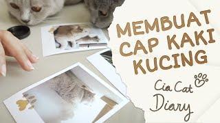Membuat Cap Kaki Kucing - Cia Cat Diary - Ep 14