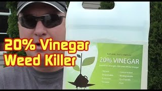 20% Acidity Vinegar Weed Killer Test---200 Grain White Vinegar