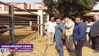 رئيس جامعة بنها يتفقد مزارع الإنتاج الحيواني والزراعي.. فيديو وصور