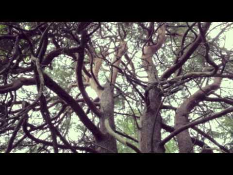 Max Garcia Conover - Hide