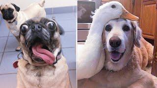 Funny Animals Videos Compilation | Best Cute Animals Videos