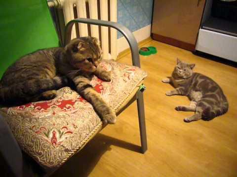 Цена котёнка - arlen-