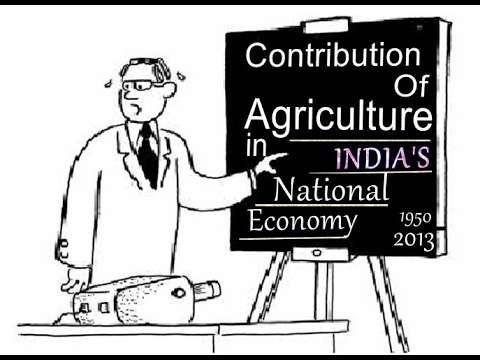contribution of agriculture in the economy