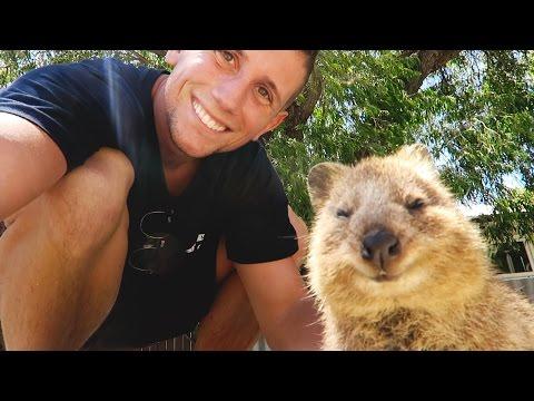 THE HAPPIEST ANIMAL ON THE PLANET - Quokkas of Rottnest Island