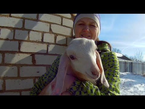 КОЗА-ДЕРЕЗА! Последние новости по козам.