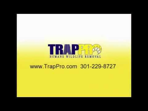 Bat Trapping & Removal from Attics, Sheds & Barns in Potomac, MD