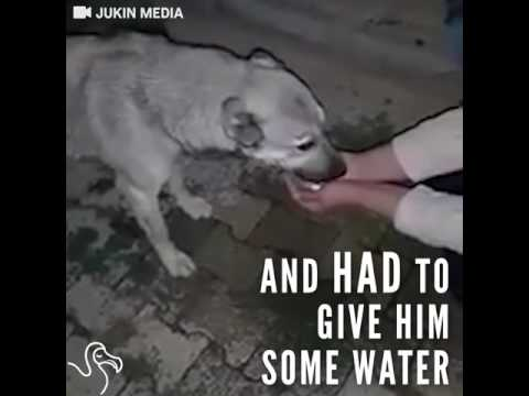 Thirsty Dog Thanks The Woman Who Brings Him Water