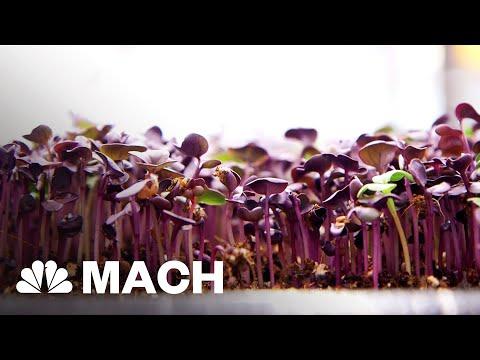 An Aquaponic Vertical Farm Grows In Brooklyn | Mach | NBC News