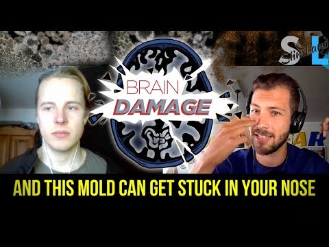 Does Your House Have Hidden Toxic Mold That Shrinks Your Brain