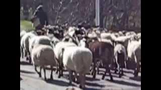ボイの谷の羊飼.