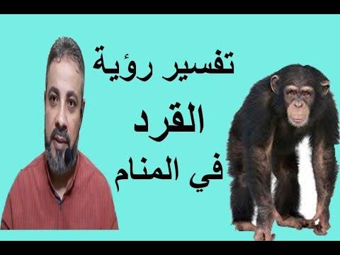 تفسير رؤية القرد للعزباء والمتزوجة والرجل في المنام اسماعيل الجعبيري Youtube