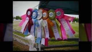 Westar Farms 2012 Show Season